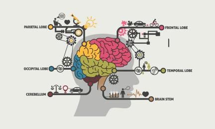 brain map.jpg